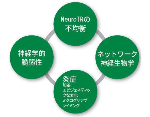 図 1:術後せん妄の病態生理学的仮説。NeuroTR:神経伝達物質。