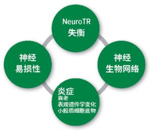 图 1:术后谵妄的病理生理学假设。NeuroTR神经递质: